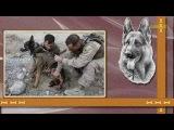 Собачья работа Собаки страдают от войн, как и люди.