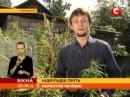 Голландські вчені наполягають що марихуана це ліки Вікна новини 28 08 2013