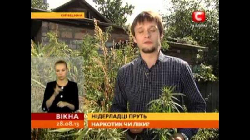 Голландські вчені наполягають, що марихуана -- це ліки - Вікна-новини - 28.08.2013