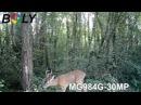 Boly 4G Wireless Scouting Ctrail cameraamera MG984G