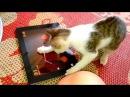 Смешные кошки и собаки играют в фруктовый ниндзя. Приколы про животных