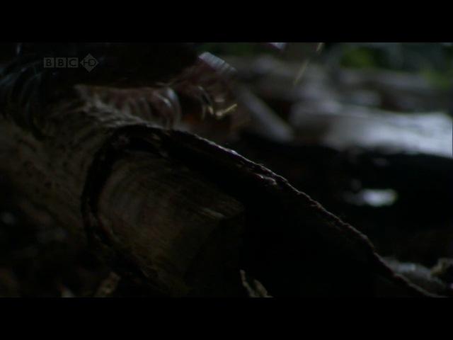 BBC: Тайны Тихого океана: Переселенцы / 2 Серия