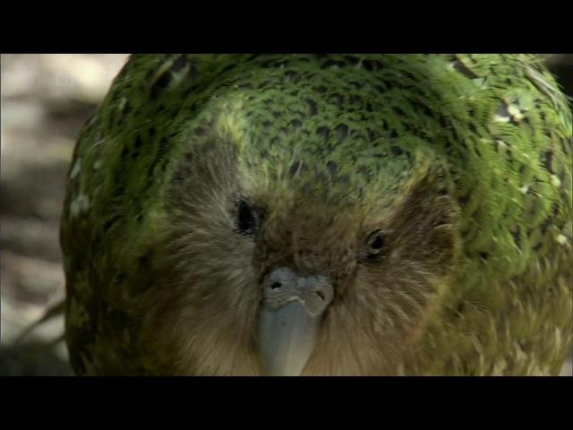 BBC Тайны Тихого океана: Странные острова / 5 Серия