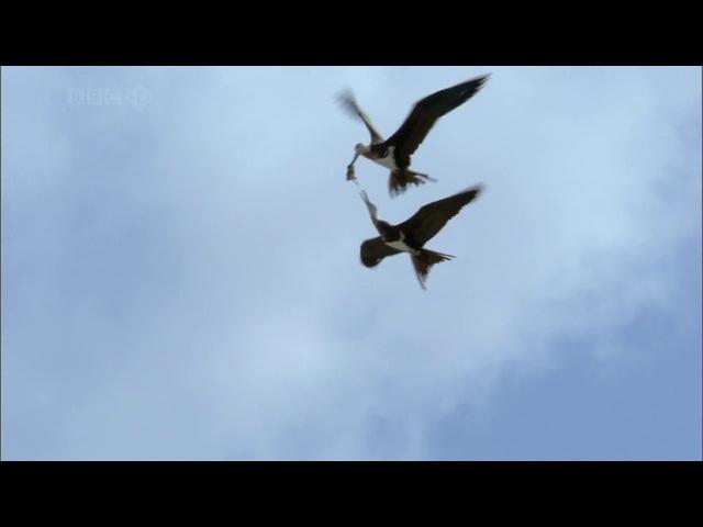 BBC: Тайны Тихого океана: Бескрайняя синева / 3 Серия