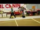 Всепородная выставка собак ранга САС-КЧФ г. Дзержинск, Померанский шпиц, Юниоры,