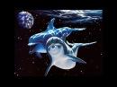 Особый ум дельфинов. Инопланетные морские жители