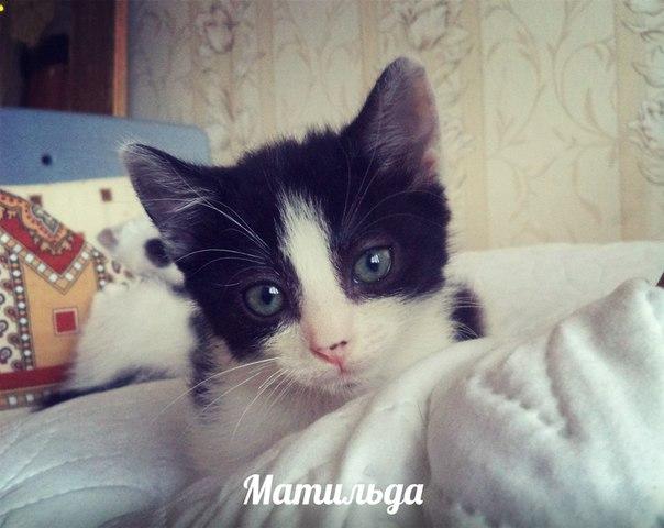 Как проглистогонить котенка в домашних условиях