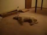 Когда приснился кошмар )) Смешной пес,прикол,ржака