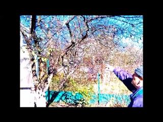 Обрезка плодовых деревьев и кустарников зимой, весной, летом и осенью