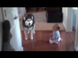 Это видео докажет вам_ дети и собаки созданы друг для друга! (1)