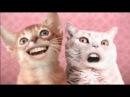 Ozone Cats-Miah ha hi