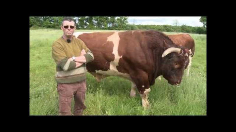 De Chez Nous 03, Frédéric Jaffre, éleveur de bovins, E.Leclerc Romorantin