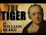 The Tiger by William Blake - Poetry Reading