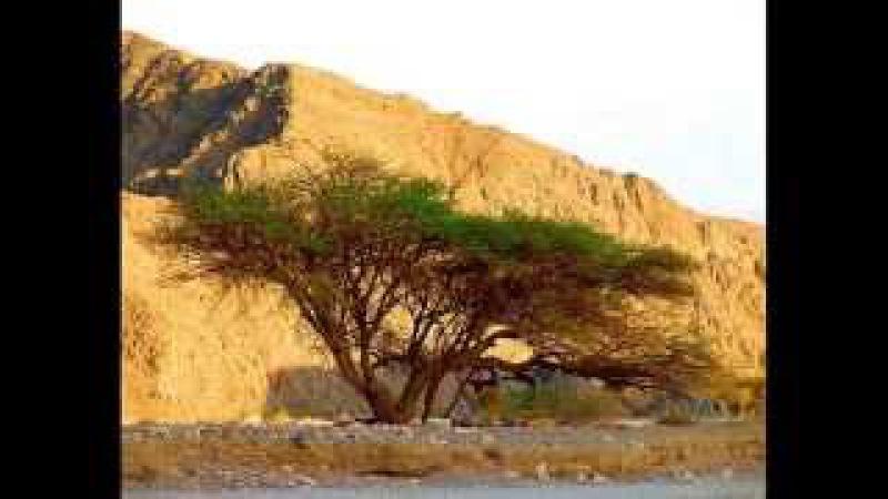 Песнь восхождения. Йосси Азулай SHir LaMaalot и природа Израиля.