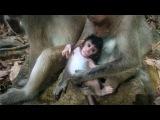 Monkey wildlife 32, Cute baby monkey with mom