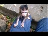 Monkey wildlife 30, Baby monkey Playing With Cameraman Mom Protector