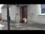 Умный пес, который сам звонит в дверь [Нетипичная Махачкала]