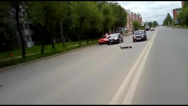 г.Сыктывкар, ул. Морозова. Утки переходят дорогу