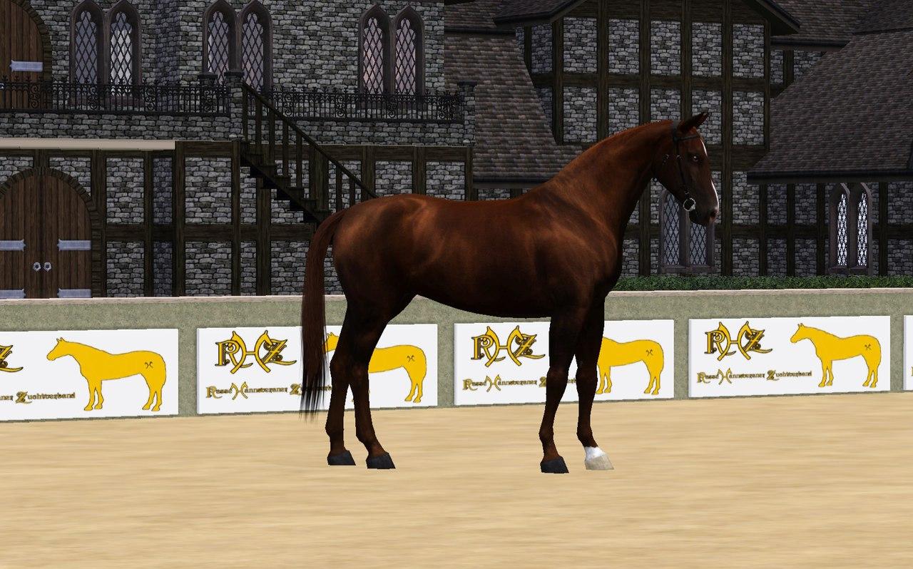 Регистрация лошадей в RHF 2 KPOOxgmR1Bo