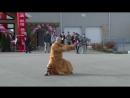 Shaolin Chen Tai Chi Kung Fu Qigong - Shi Xing Wu