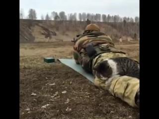 Суровый сепарский кот