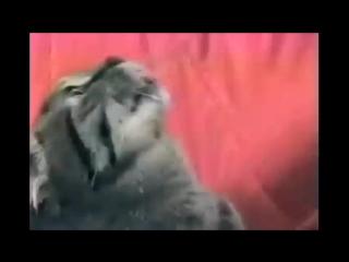 Кот и флешбеки из Вьетнама (Vietnam Flashback)