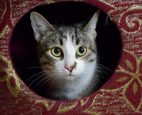 Ищу дом прекрасной кошечке Полли. Полюшка просто океан нежности и мурч