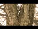 Владимир Антонов - Психическая саморегуляция 2