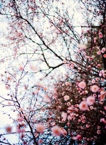 Нежность Весны смягчает сердце и окрыляет душу...