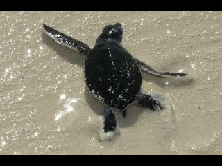 Беги черепашка - Run turtle run