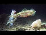Night Dive - Reef Life of the Andaman - Part 26
