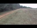 Отличная охота на кабана. видео подборка реальных охотничьих моментов