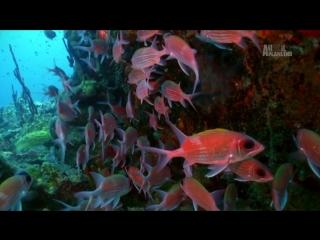 Неизведанные острова 1-й сезон 2-я серия. Карибы - Дикая сторона рая / Wildest Islands (2012) HD