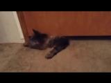 жидкий кот 😀👍