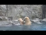 Медвежонок Упал в Воду. Baby Bear Tries to Climb Out of the Water.