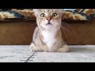 Кот и фильм ужасов