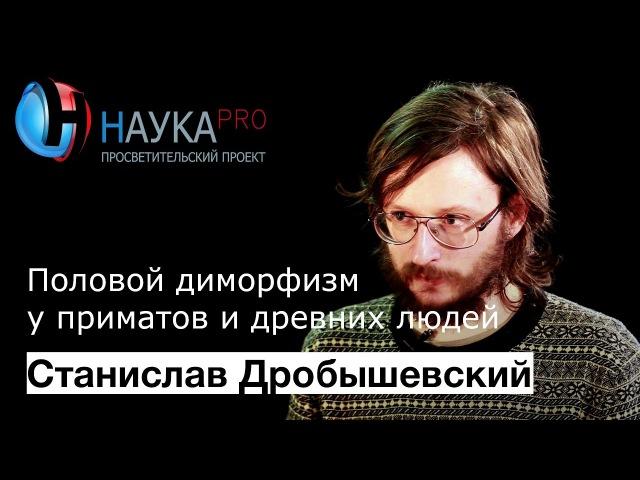 Станислав Дробышевский - Половой диморфизм у приматов и древних людей