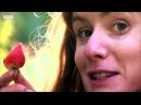 Edible Garden 4 Juicy Fruits - Homesteading Self-Sufficiency