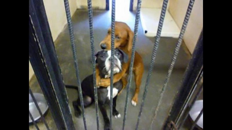 Собаки обнимали друг друга перед эвтаназией и это спасло им жизнь