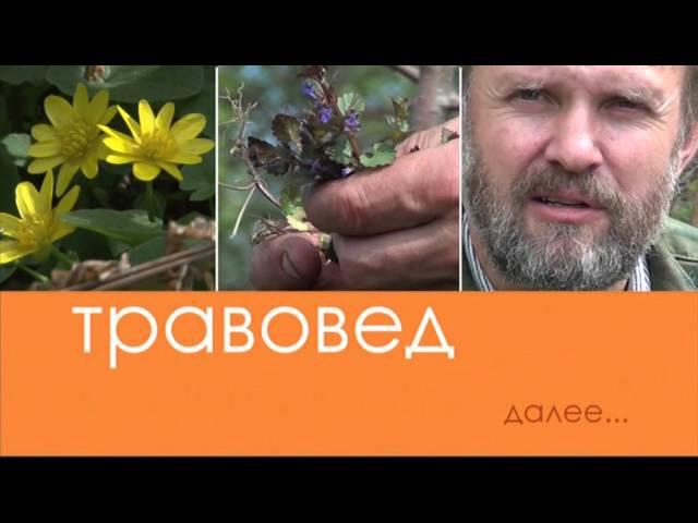 Травовед. Весенний витаминный чай. Рассказывает Моряков Сергей Викторович