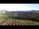 Vineyards in Tegea