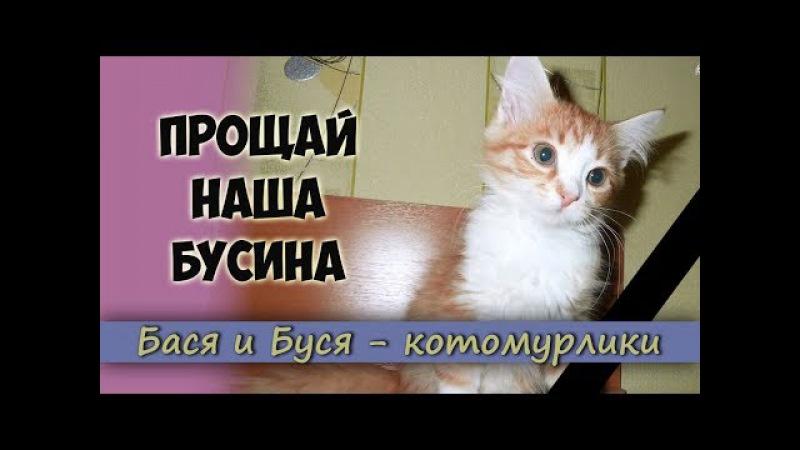 Прощай наша Бусина. Наша кошечка УМЕРЛА! Плачем и скорбим. Видео в память о нашей любимой Бусинке.