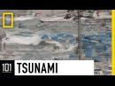 Tsunamis 101 National Geographic