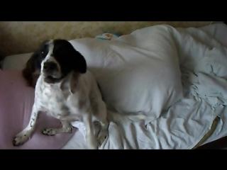 Собака-охраняка