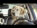 Собаку какой породы завести - отвечает Антуан Наджарян