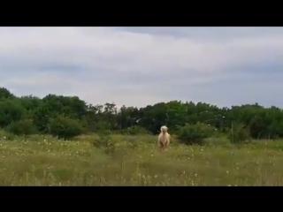 Гуляющий по лесу верблюд под Ставрополем