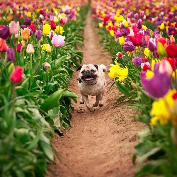 Весне дорогу!