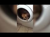 ЛУЧШИЕ ПРИКОЛЫ с Котами Самые Смешные Видео про Кошки и Коты Подборка Приколов #