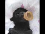 Милота в высшей степени - детёныш летучей собаки