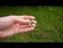 Букет из пионовидных роз и фрезии